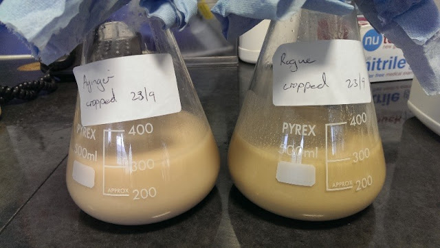 Cropping yeast