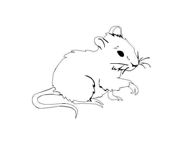 Tranh tô màu con chuột