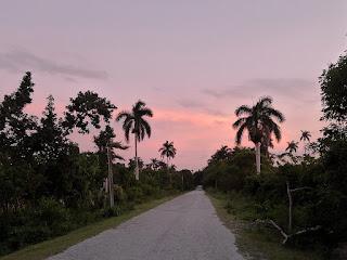 Kuba, Matanzas, Yumurital, Weg in der Abenddämmerung, rechts und links üppiges Grün und Königspalmen.