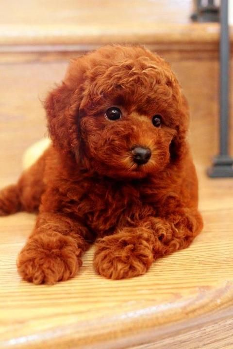 Top 5 Best Intelligence Dogs Breed