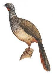 endemic birds Colombia