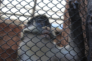 kebun binatang jawa timur, kebun binatang, batu scret zoo