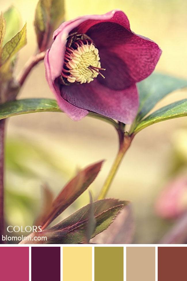 paletas_de_colores_23_inspiracion_primavera_4