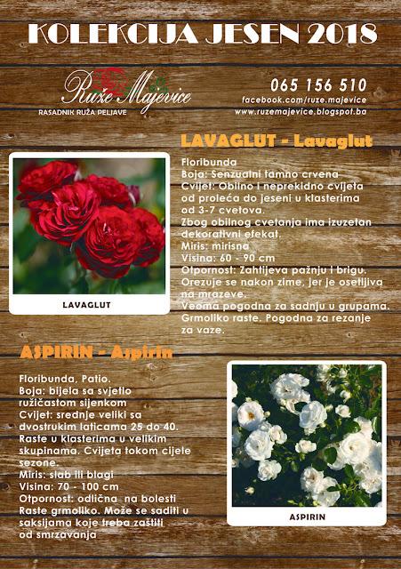 Crvena ruža Lavaglut i bijela ruža Aspirin