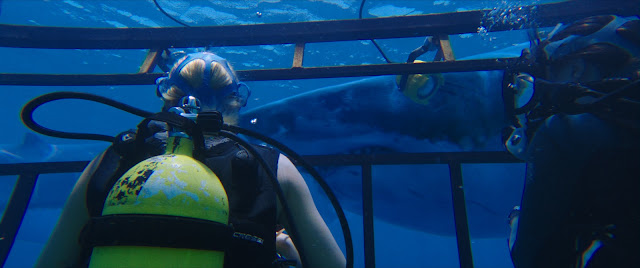 47 Metres Down Mandy Moore & Claire Holt cage diving with Great White Sharks