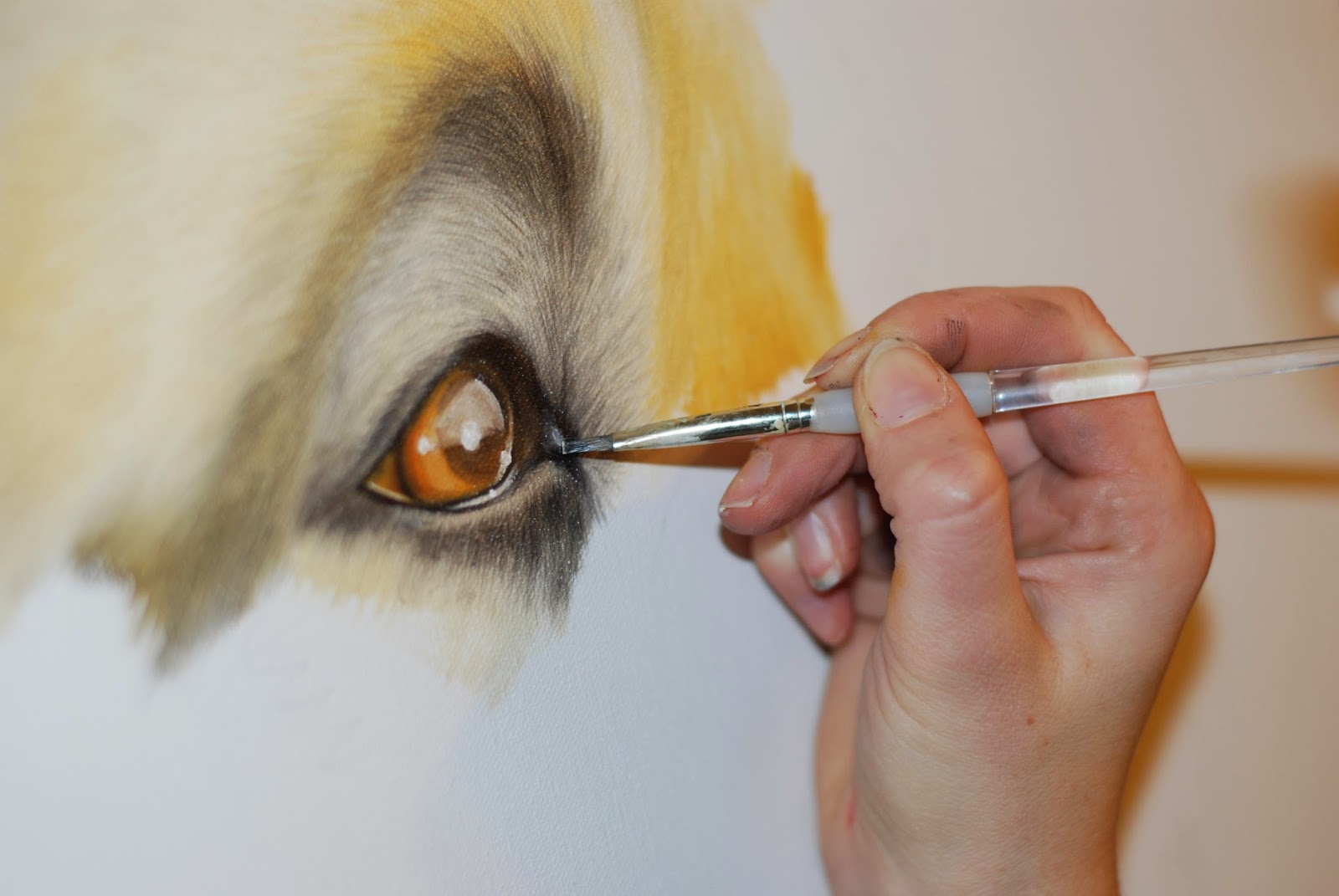 Pet portrait in progress of a Japanese Akita Rottweiler oil on canvas