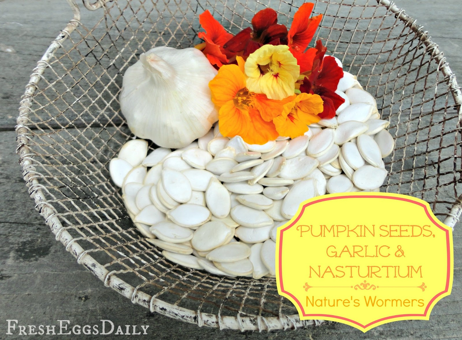 Using Pumpkins Garlic Nasturtium For Worming Chickens Fresh Chicken Parts Diagram Http Wwwnwbackyardveggiescom 2012 06 Eggs Daily