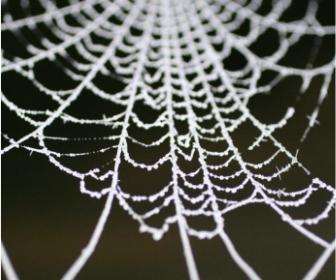 সত্যিই কি মাকড়সার জাল স্টিলএর থেকে বেশি শক্তিশালী? Amazing facts about Spider silk - Ata gache tota pakhi
