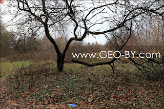 Усадьба Домейко в Сочивках: парк