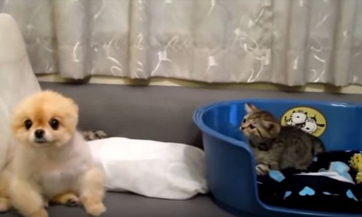photo anak kucing dan anak anjing