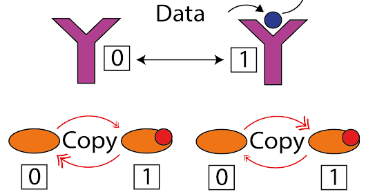 Two papers on the fundamental principles of biomolecular copying