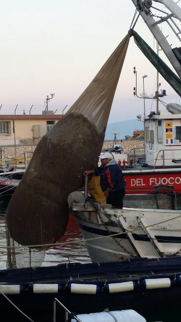 Italian fishing trawler nets 2 massive Roman storage jars