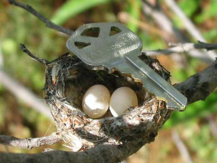World's smallest  bird egg