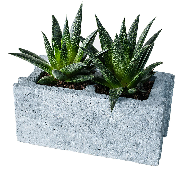 2%2Bacinder-block-cement-planter-xl 25 Stunning Planter Concrete Blocks Alternatives to Transform Your Backyard And That Are All Your Front Porch Needs Interior