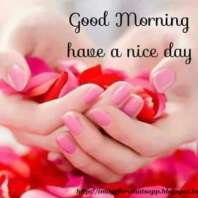 Good Morning Have a Lovely Day wishes on whatsapp