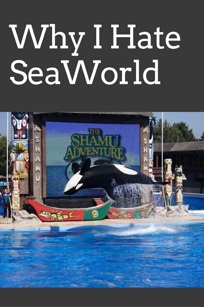 Why I Hate SeaWorld