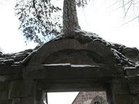 Vier besondere Bäume im Klosterviertel von Bad Herrenalb