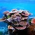 Arrecifes de coral brindan a República Dominicana beneficios valorados en US$1.140 millones al año