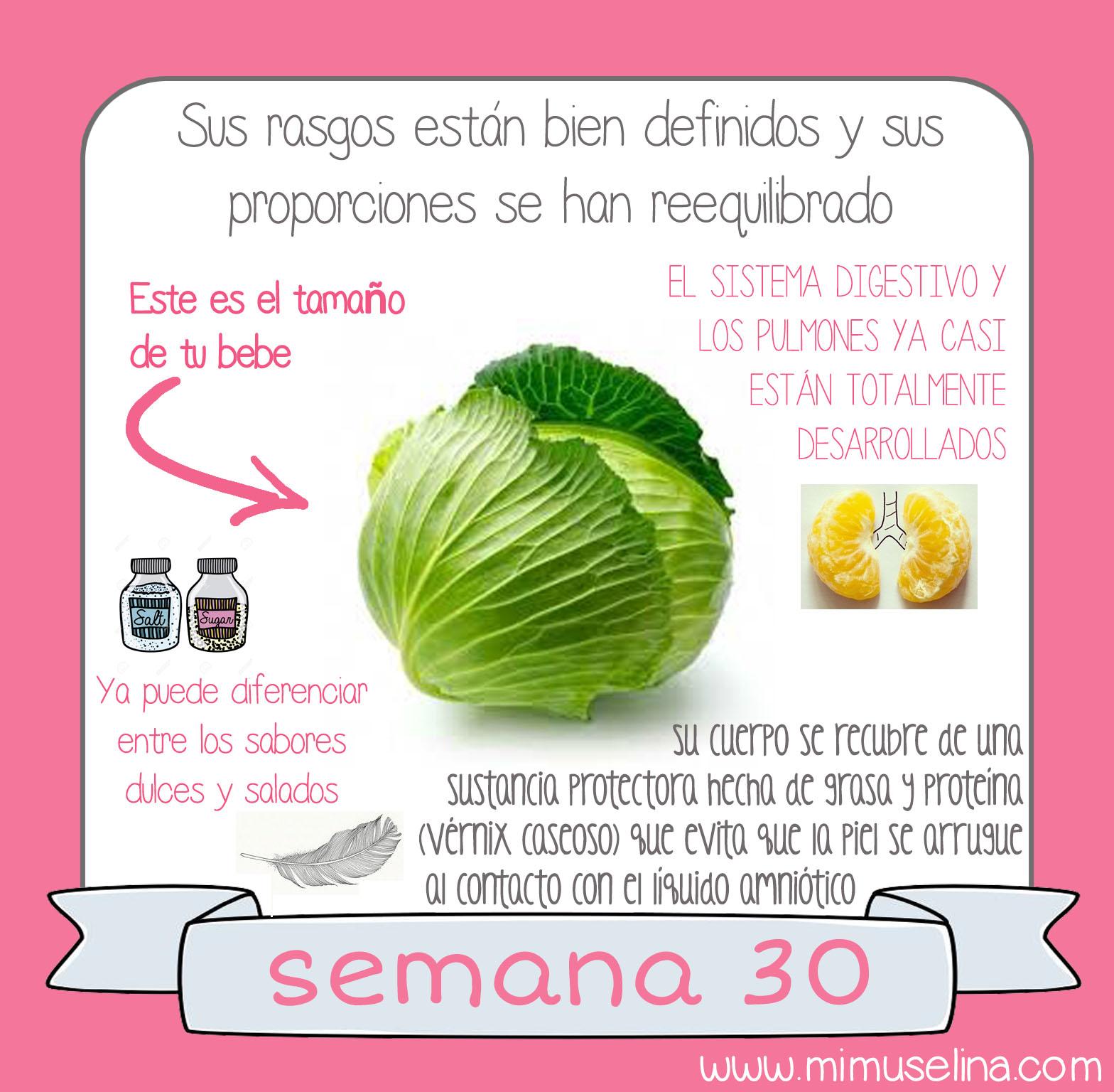 fbf1ab5c4 libro album recuerdos del embarazo blog mimuselina información comparación  tamaño feto con frutas bebe como col