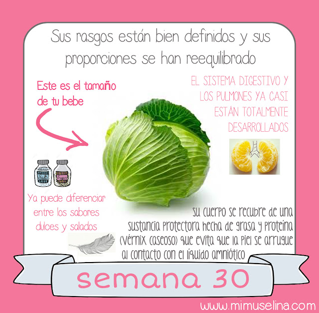 libro album recuerdos del embarazo blog mimuselina información comparación tamaño feto con frutas bebe como col o repollo semana 30