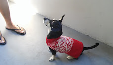 Dog Sweater from Swatch