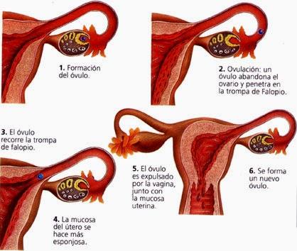 por que salen coagulos de sangre en la menstruacion