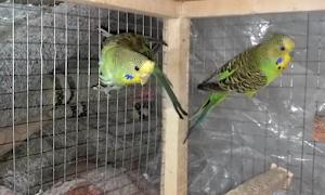 How Are Bird Eggs Fertilized