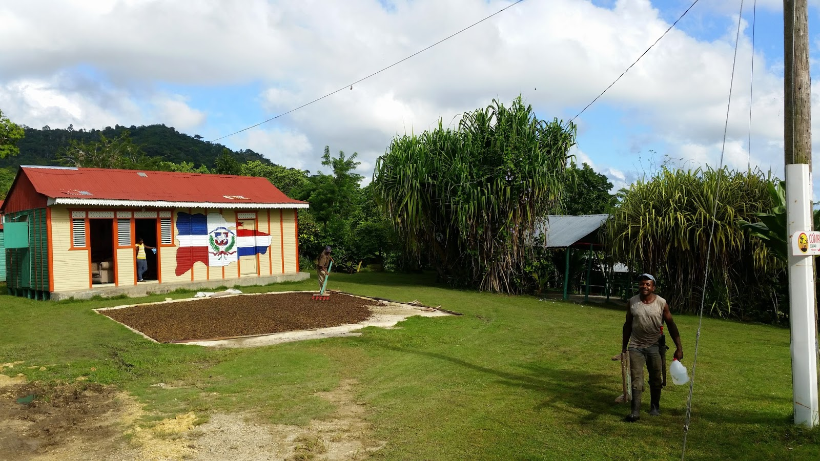 Suszenie kawy na Dominikanie