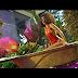 New Video Sheebah - Akkuse Download Mp4