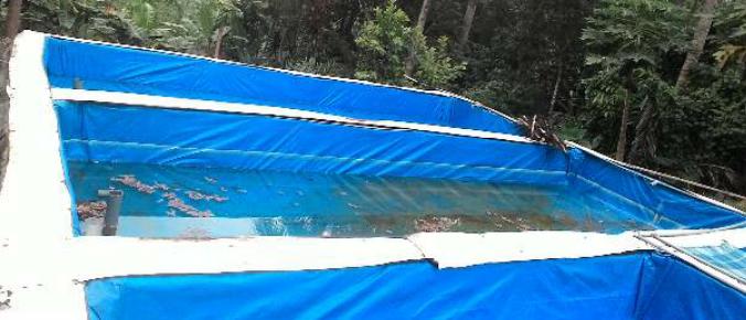 Budidaya Ikan Lele Kolam Terpal Archives Infoakuakultur Com