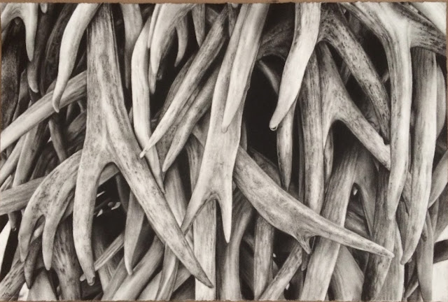 Antlers, charcoal drawing, black and white, calgary artist, realism