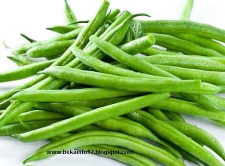Kacang Buncis | Jenis, manfaat dan cara budidaya
