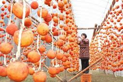 矢櫃柿干し柿作り