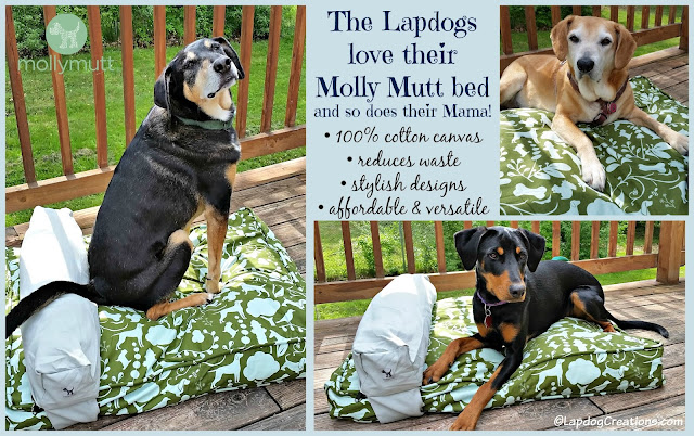 The Lapdogs love their #MollyMutt bed and so does their Mama! Completely washable, affordable, stylish and affordable - what's not to love? #recycle #dogbed #abedoftheirown #rescuedogs #happydogs #LapdogCreations ©LapdogCreations
