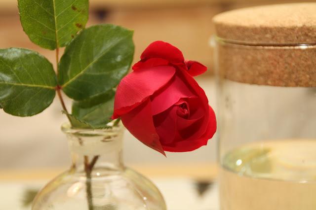 rose bouton photo