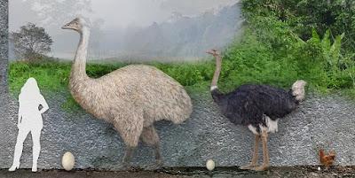 Comparación tamaño Aepyornis
