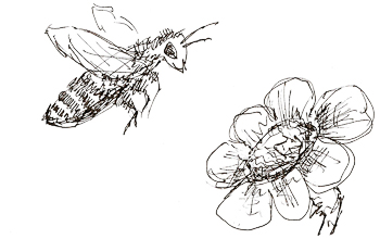 Rymowanki O Pszczółce Wiersz Wiosenny