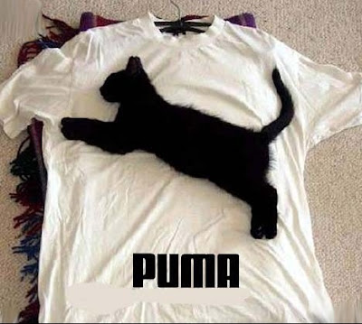 photo drôle puma