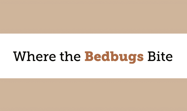 Where the Bed Bugs Bite