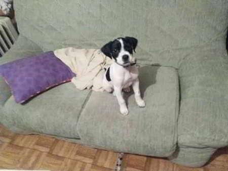 cachorro de talla mediana
