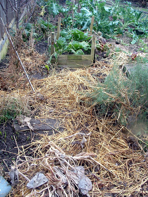 Photo of an untidy garden bed with straw mulch