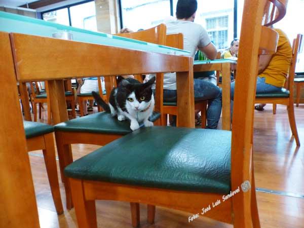 Gatuccino café con gatos, Las Palmas de Gran Canaria