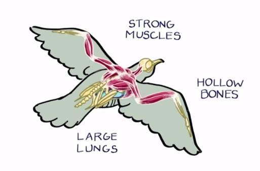Making A Bird Armature