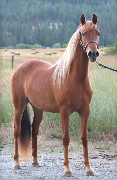 Pure Ponies: Horse Colours Part II - photo#27