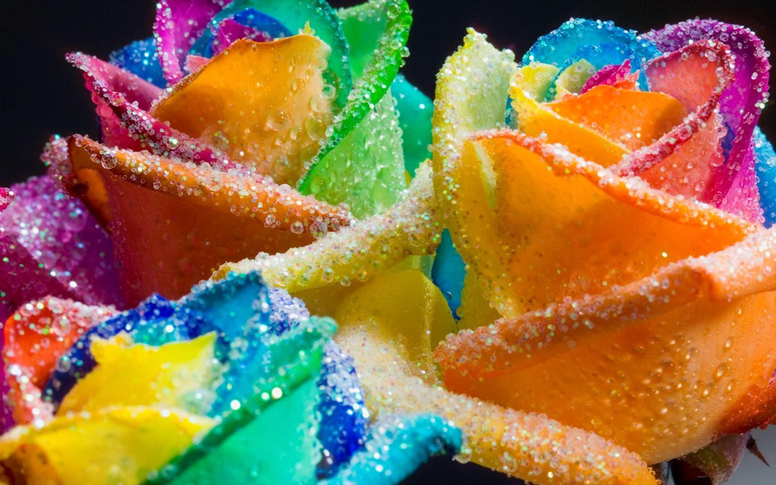 art pictures: Colorful Rose Wallpapers