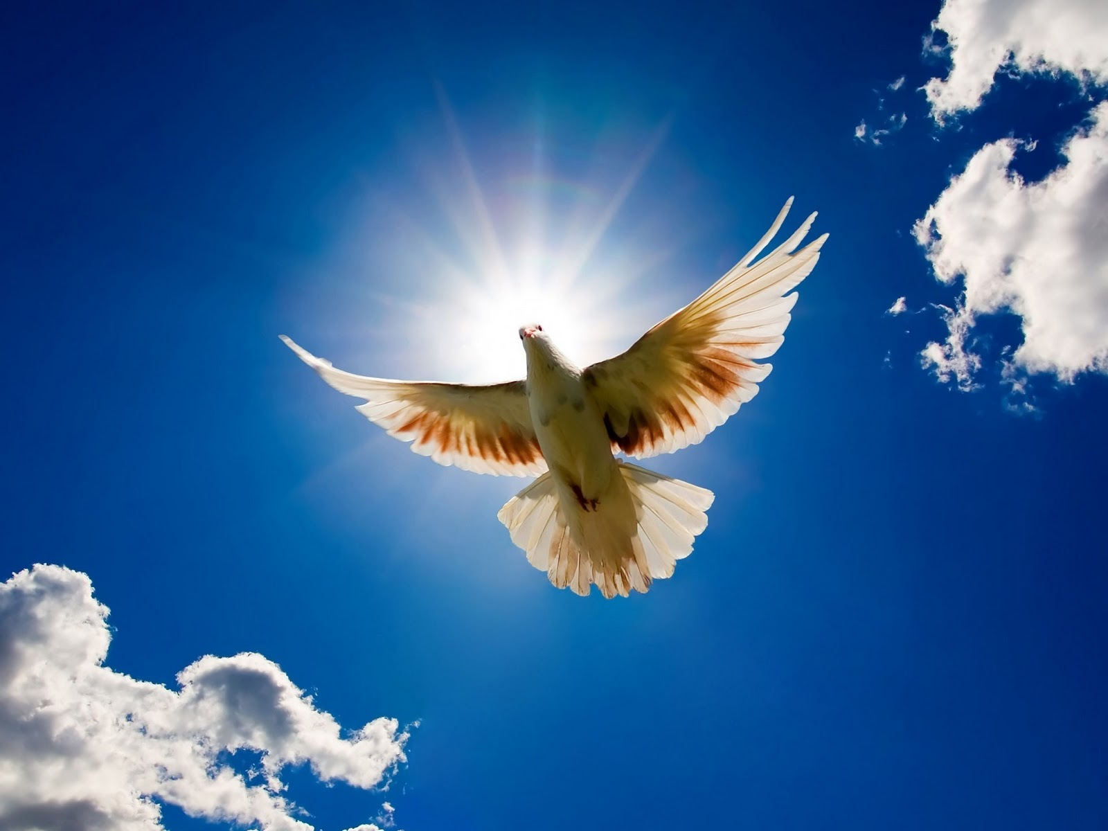 Freedom Birds Flying Hd Wallpaper Bird: Best Desktop HD Wallpapers: Bird Desktop