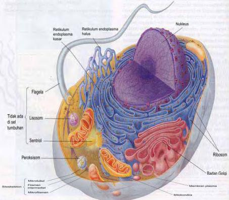 Struktur Sel dan fungsi sel Hewan
