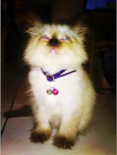 [TIPS & TRICKS] Cara Mengobati Kucing Yang Terkena Scabies / Tungau