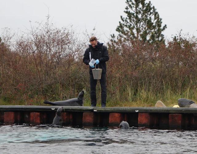 Das Nordsee-Ozeanarium in Hirtshals: Ein tolles Ausflugsziel für Familien in Nord-Jütland. Die Fütterung der Robben und Seehunde ist eine Haupt Attraktion.