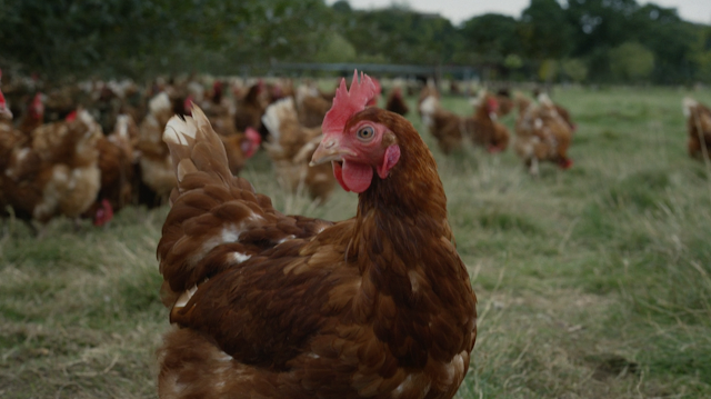 Leo Burnett London Celebrates the Farmers and the Quality Ingredients Behind Mcdonald's